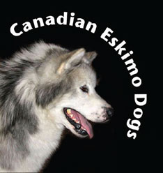 canadian kennel club and the alaskan malamute club of canada
